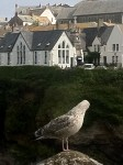 "A young gull is in the foreground and ""Port Wenn School"" is in the background (with church-like windows)."